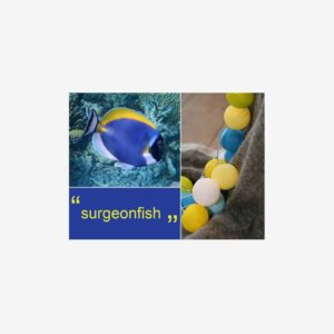 Ljusslinga Surgeonfish, 35 bollar
